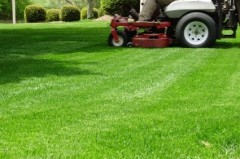 Lawn mowing landscape care plants trees sod mulch palm Sanford DeLand