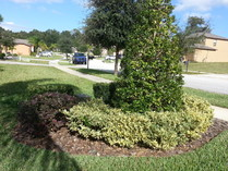 Lawn landscape mowing cutting care maintenance plant palm tree sod mulch Sandford Deland