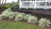 Landscape lawn maintenance services deland sanford palm coast